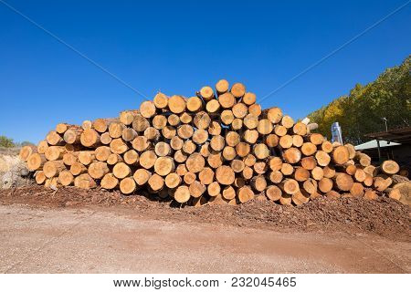 Stacked Wooden Logs In The Sawmill