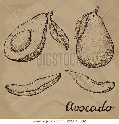 Hand Drawn Avocado Set. Whole Avocado, Sliced Pieces And Half Sketch. Engraved Style Illustration. V