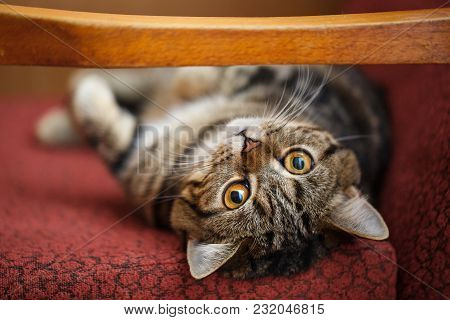 Cute Little Kitten. The Fluffy Pet Comfortably Settled To Sleep Or To Play. Cute Cozy Background. Mo