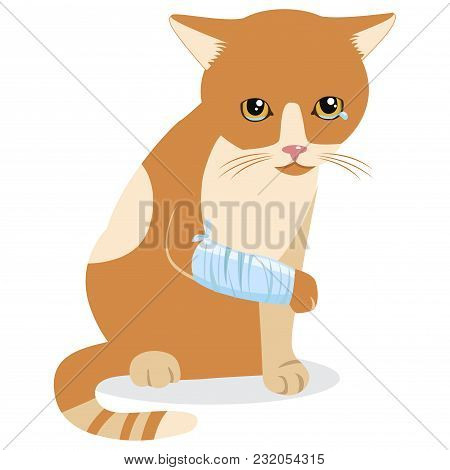 Cry Cat With Splinting Leg. Sad Crying Cat Cartoon Vector Illustration. Emotional Catty Face. Tears