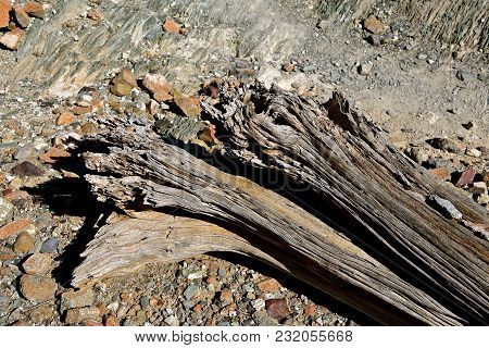 The Weathered Wooden Log Remains Lying In In A Rocky Environment Is That Of A Former Cactus (saguaro