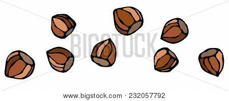 Whole Unpeeled Hazelnuts In Shell. Healthy Snack. Fresh Farm Harvest Product. Vegetarian Food. Reali