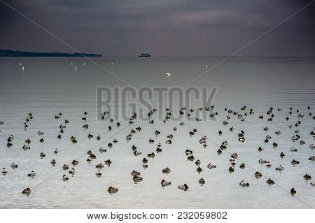 Winter At Lake Constance With Ducks And Ferry Boat
