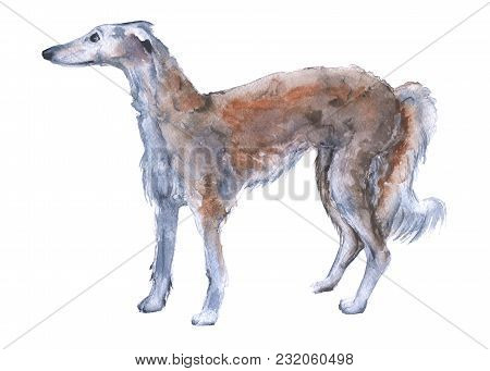One Dog Russian Greyhound. Isolated On White Background. Watercolor Illustration