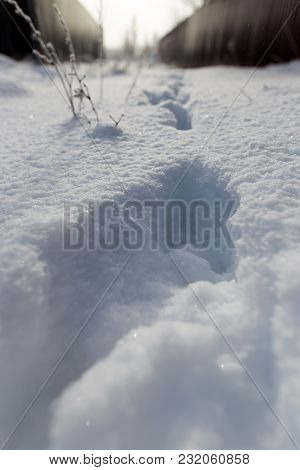Footprints Of The Beast On The Snow In Winter .