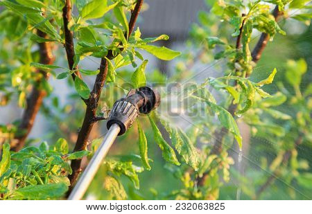 Sprinkling of trees with pesticides in the spring, pest control poster