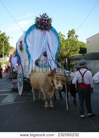 Alora, Spain - September 25, 2011: Bull Pulling Old Traditional Cart At Local Fiesta In Andalusia