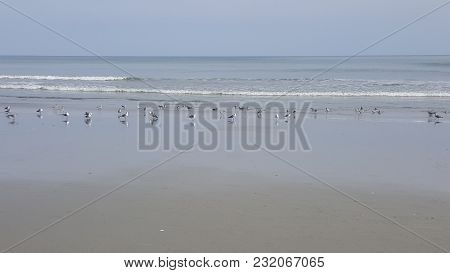 Flock Of Birds And Sea Gulls Along The Shoreline On The Beach With The Atlantic Ocean In The Backgro