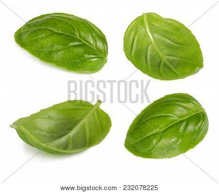Set Of Basil Leaf Isolated On White