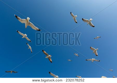 Many seagulls fly against the blue sky in a sunny day