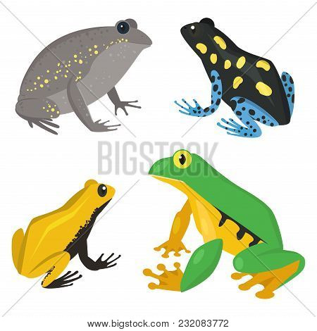 Frog Vector Cartoon Tropical Wildlife Animal Green Froggy Nature Funny Illustration Toxic Toad Amphi