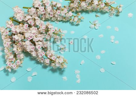 Spring Aqua Blue Background With White Blooming Chestnut Flowers, Close-up Perspective View, Diagona