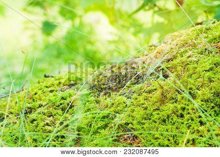 Blur Toned Scenic Wild Nature Pastel Green Yellow Selective Focus Bokeh