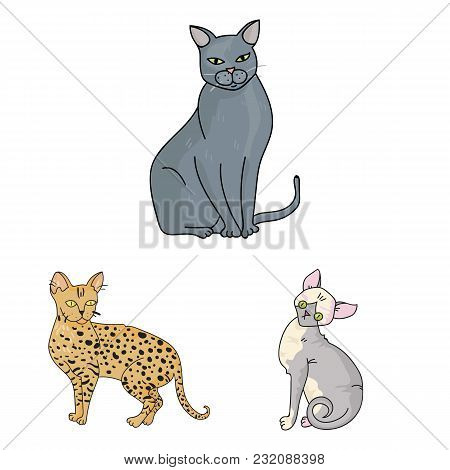 Breeds Of Cats Cartoon Icons In Set Collection For Design. Pet Cat Vector Symbol Stock  Illustration