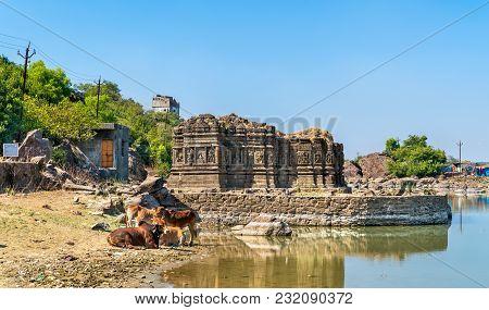 Cows At Lakulish Temple And Chhashiyu Lake - Pavagadh Hill In Gujarat State Of India