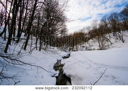 Landscape with the image of winter wood