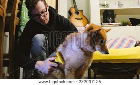 Man Combs The Shreds Of The Wool From The Dog At Home