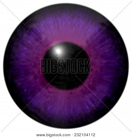 Detail Of Eye With Purple Colored Iris, Veins And Black Pupil