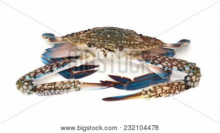 Crab Isolated, Close Up Of Crustacean Isolated On White Background