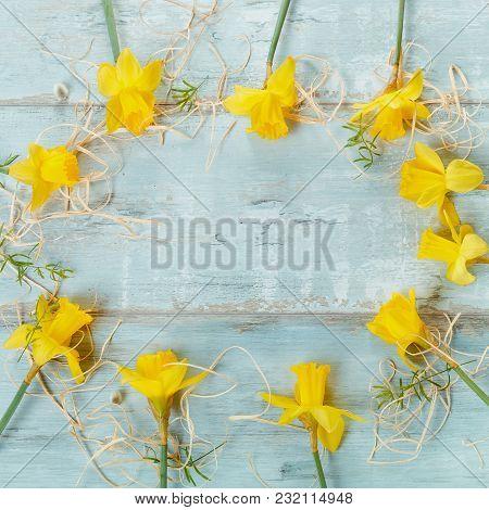 Spring Floral Border, Beautiful Fresh Daffodils Flowers On Blue Wooden Desk. Easter Background. Sele