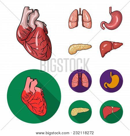 Heart, Lungs, Stomach, Pancreas. Human Organs Set Collection Icons In Cartoon, Flat Style Vector Sym