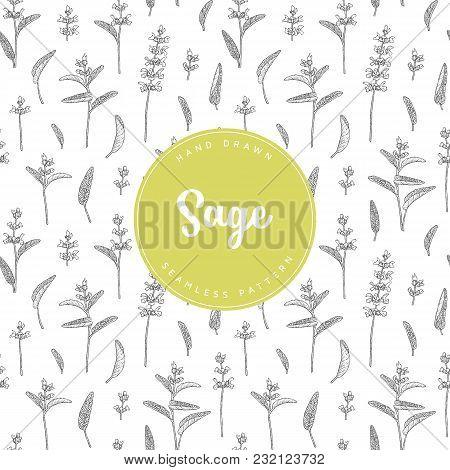 Vector Hand Drawn Floral Seamless Pattern And Backdrop. Elegant Hand Sketched Sage Flower Drawing. V