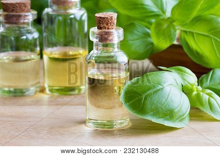 A Bottle Of Basil Essential Oil With Fresh Basil Twigs On A Table