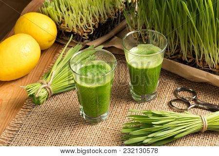 Two Barley Grass Shots With Freshly Grown Barley Grass.