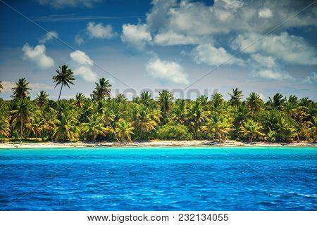 Palm Trees And Tropical Beach, Dominican Republic. Saona Island.