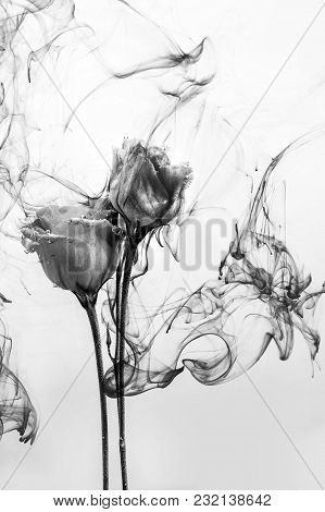 Black And White Photo. White Poses Inside In Water On A White Background. Flowers Is Under The Water