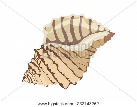 Vector Colored Icon Of Sea And Ocean Shell On White Background. Element Of Underwater World.