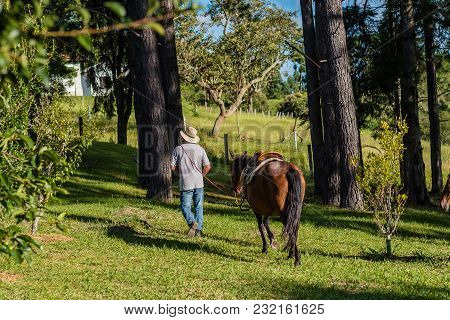 Profile Of Brown Horse, Man Leading It By The Stirrups, Cunha, Sao Paulo