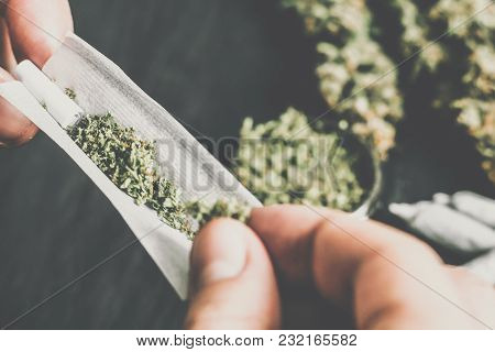 The Man Twists The Canth From Fresh Marijuana