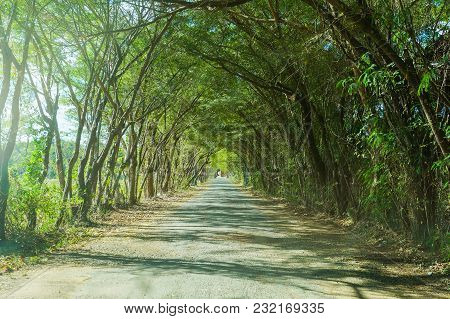 Beautiful Tunnel Of Trees Country Road In Rural Of Thailand