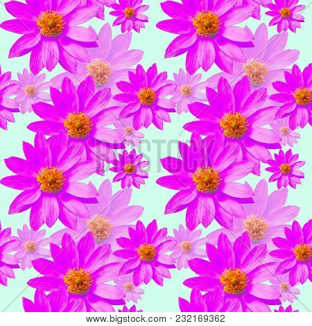 Adonis. Texture Of Flowers. Seamless Pattern For Continuous Replicate. Floral Background, Photo Coll