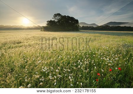 Spring daisy flowers at motning in foggy meadow. Beautiful landscapes.