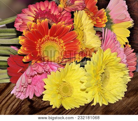 Beautiful Bouquet Of Different Colorful Gerberas Close Up On A Wooden Background Concept Of Festive