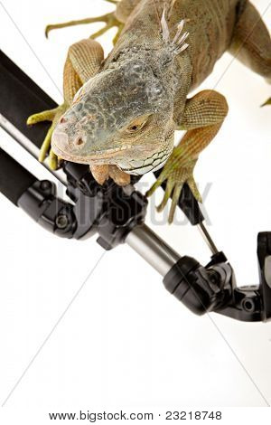 Iguana in photography accessories. tripod. poster