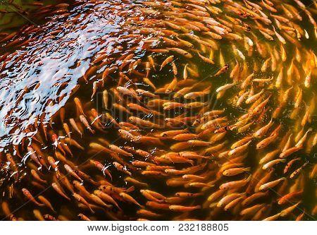Fish Spa Or Fish Massage And Therapy In Sri Lanka