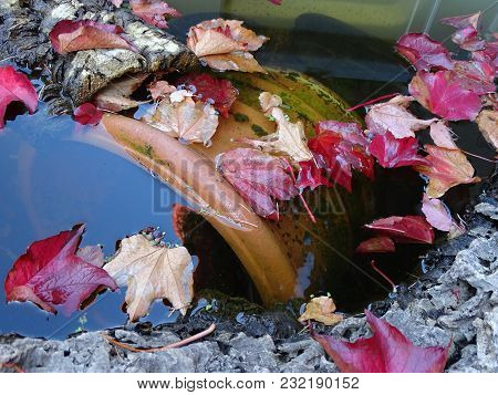 Autumn Colored Leaves In A Garden Pond With Tree Trunk And With Flowerpot