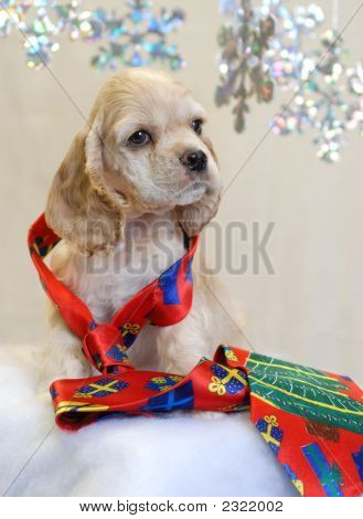 american cocker spaniel puppy with bright christmas tie poster