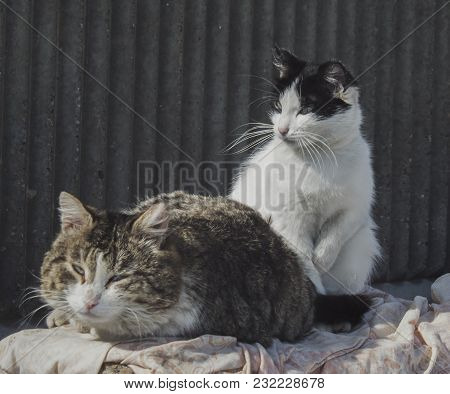 Two Street Cats. Cats Portrait. Cats Bask In The Sun.