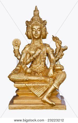 Golden brahma