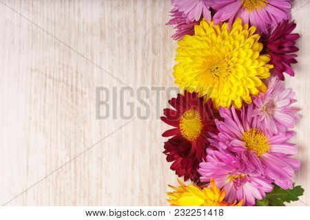 Right Frame Border Of Chrysanthemum Flowers On Light Wooden Background From Above.