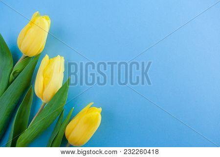 Three Yellow Tulips On The Left On Blue Background With Copy Space.