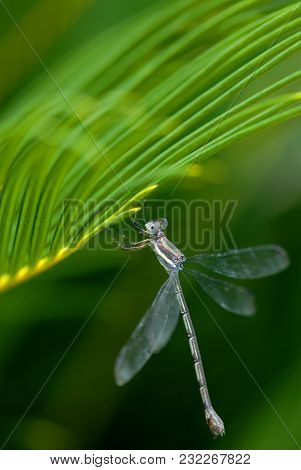 A Drangonfly Perches On The Edge Of A Palm From In Southern Arizona.