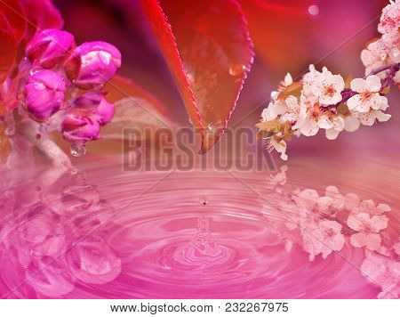 Impact Of Drop Trickling From The Leaf And Apple And Cherry Branches. Red, Pink Stylized Wallpaper B