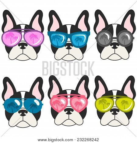 French Bulldogs With Sunglasses Isolated On White