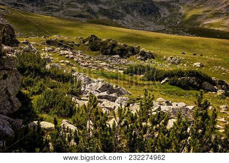 Sheep Grazing The High Alpine Pastures Of The Mountains In Romania