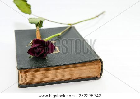 Dry Red Rose On Old Holy Bible Isolated On White Background.